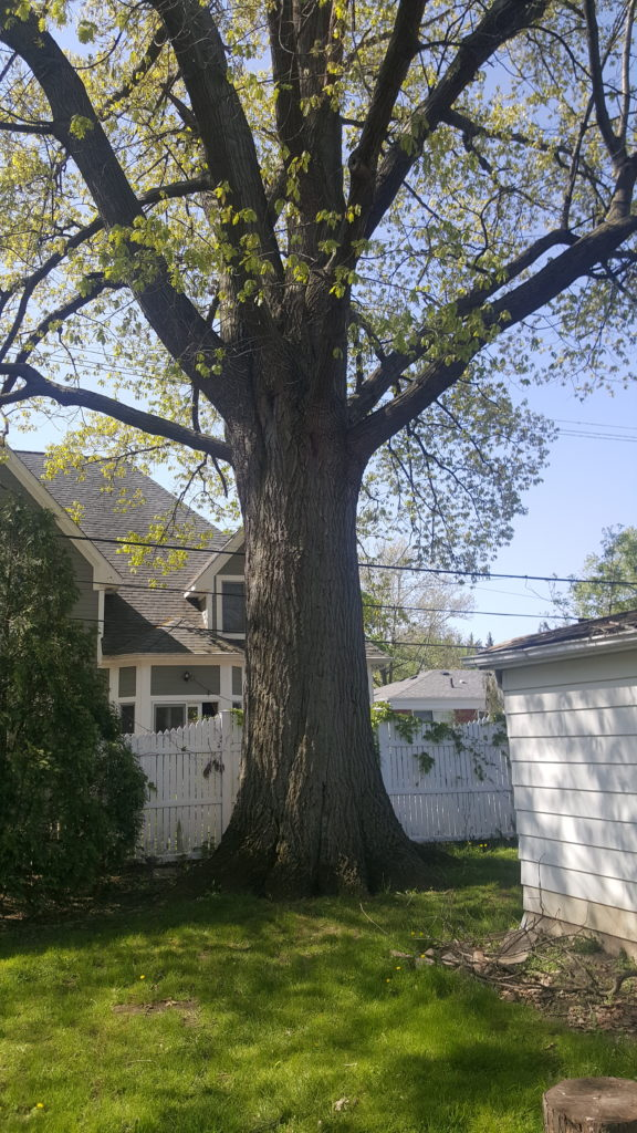 PPM Tree Service & Arbor Care will send an arborist to evaluate your tree to prescribe the best tree trimming plan.