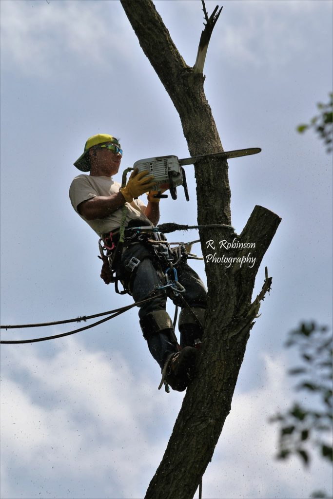 PPM Tree Service & Arbor Care offers tree cutting services for even the tallest of trees.