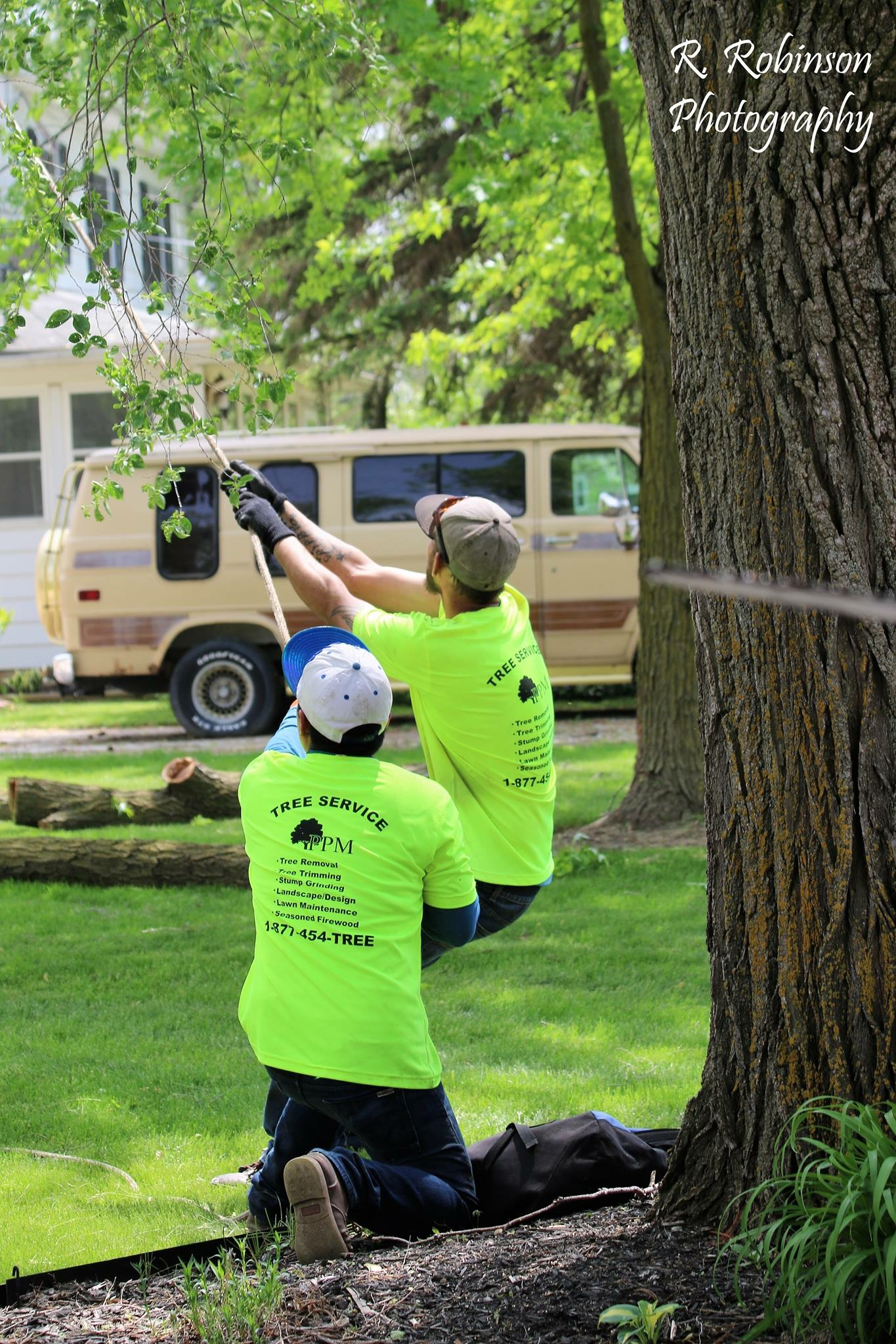 Cable bracing trees is an art, and our team of professionals at PPM Tree Service & Arbor Care loves to do it. Let us set up your tree brace properly for the best results.