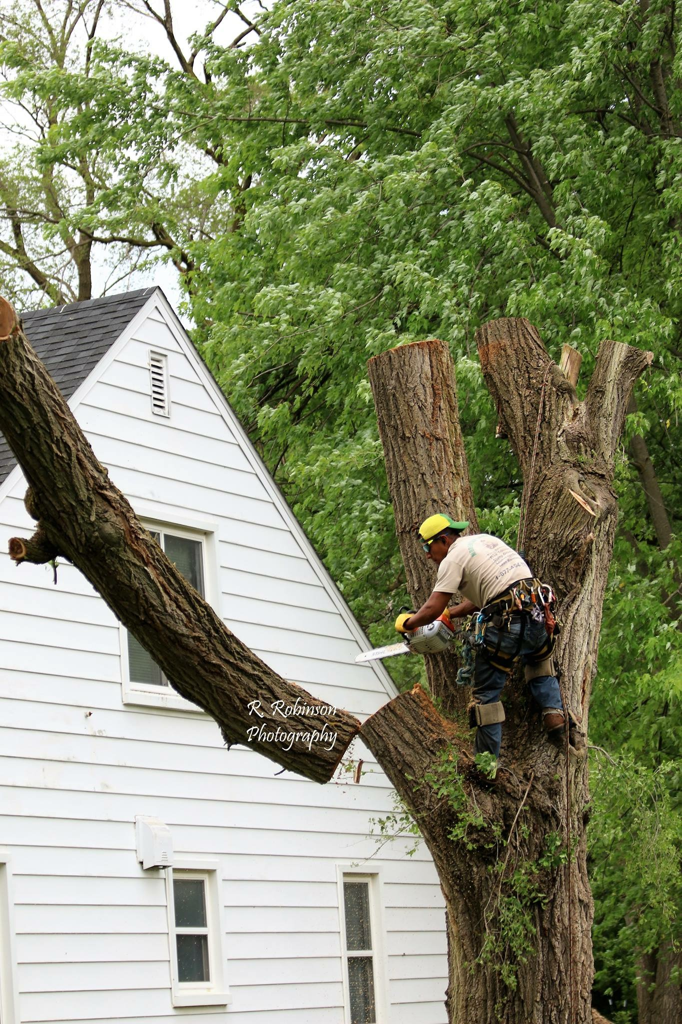 Need to cut down a tree close to your house? PPM Tree Service & Arbor Care offers precise tree felling by experienced, professional crews.