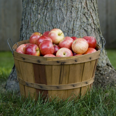Fruit trees can be a reliable source of food throughout the year.