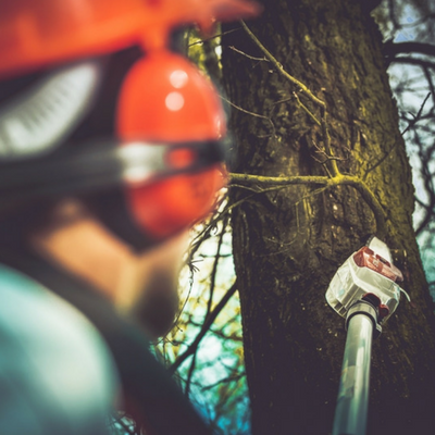 Finding the right company is critical to your trees health.