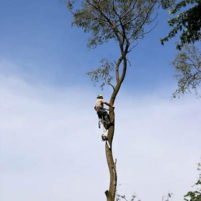 Tree care can be risky business, make sure your tree service company is insured!