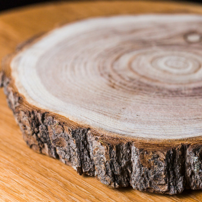 Decorate your home with parts of the tree stump.