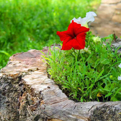 Brighten up your yard by turning a stump into a flower pot.