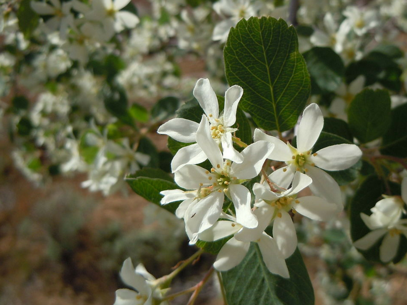 5 Beautiful Flowering Trees That Thrive In Michigan