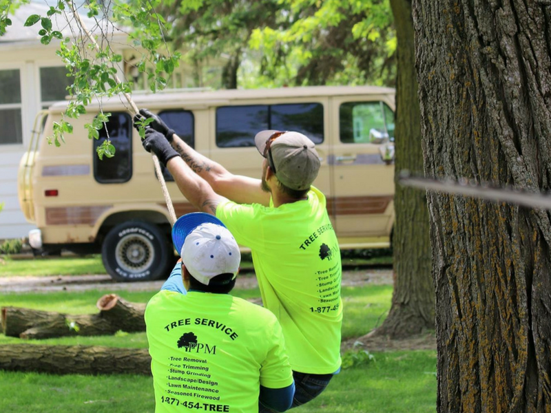 tree cable service
