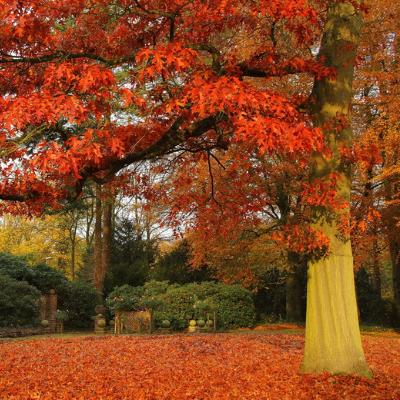 fall lawn care happy fall tree