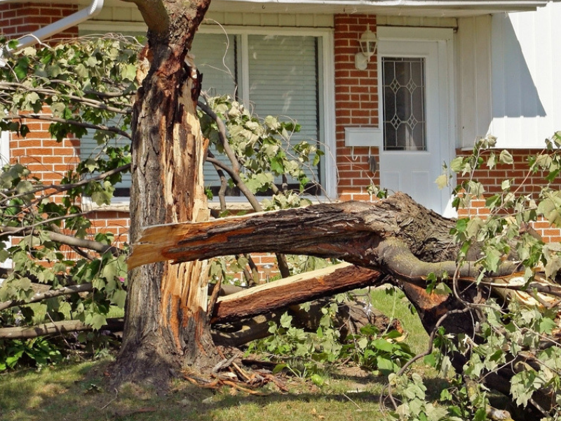 Tree cabling will help prevent trees from splitting, saving you time and money in the long run.