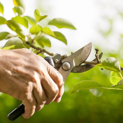 fall lawn care pruning
