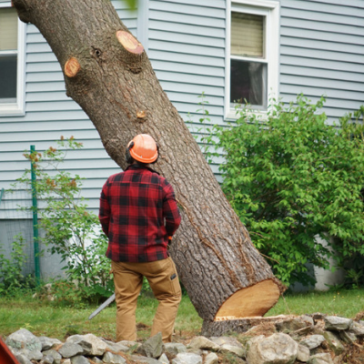 always be safe with tree removal