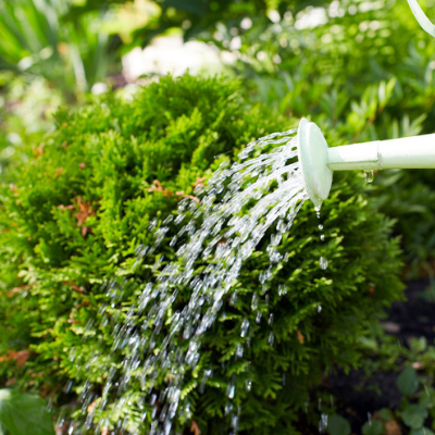 fall lawn care water your plants