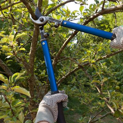 tree pruning in Canton, MI