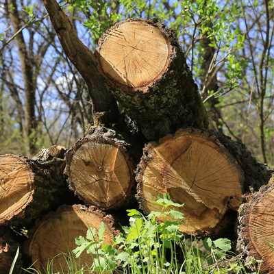 oak tree firewood, fireplace wood