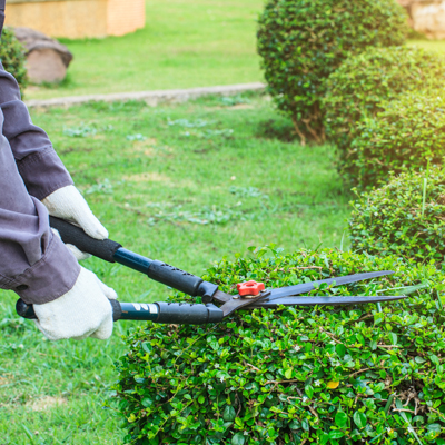 correct way to prune bushes and trees