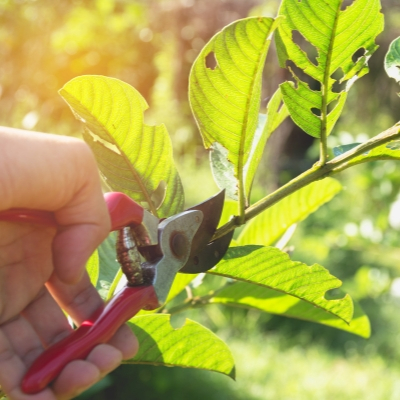 Prune your trees and shrubs to promote healthy growth in Farmington Hills, MI