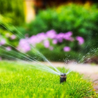 Motion activated sprinklers are one of the methods to keep deer from damaging your trees & plants in Livonia, MI
