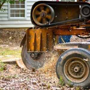 Stump grinding is a quick and efficient stump removal method here in Ypsilanti, MI.