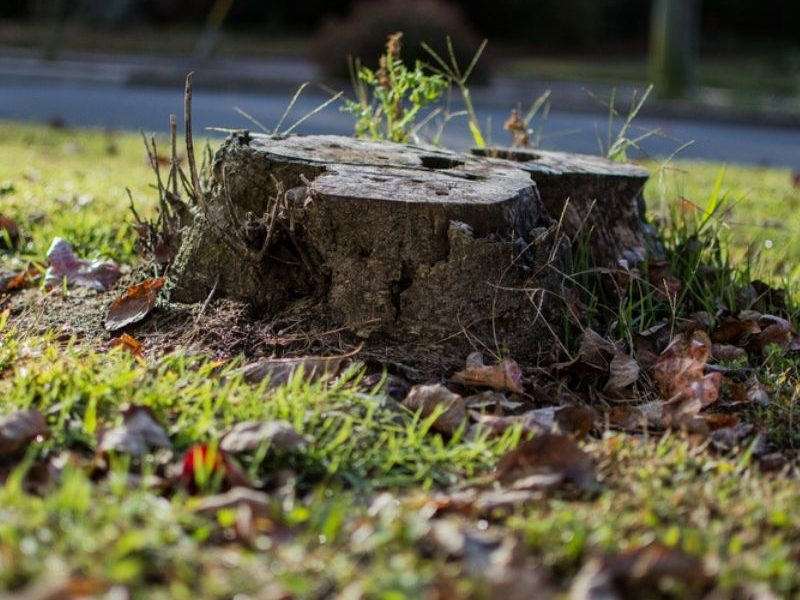 Tree stump removal here in Ann Arbor, MI is a big job, PPM Tree & Arbor Care has the stump removal services for you.