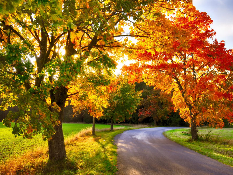 These are a few of the best maple trees to add to your Michigan yard.