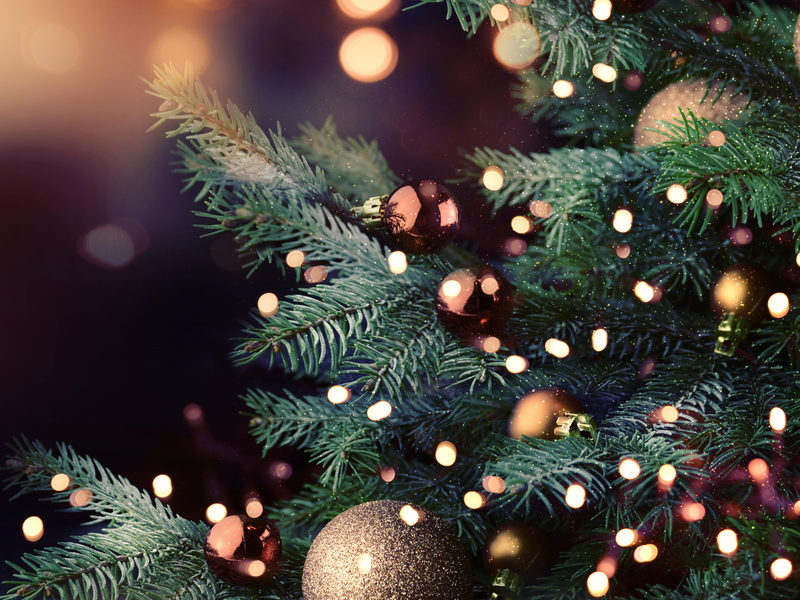 Check out our essential list to find the best Christmas trees for you and your family here in Novi, MI.
