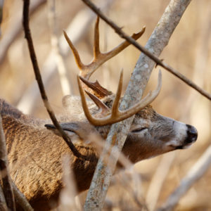 Don't let deer rubbing damage your Detroit trees, check out our fall tree care tips to give your tree the best shot at success.