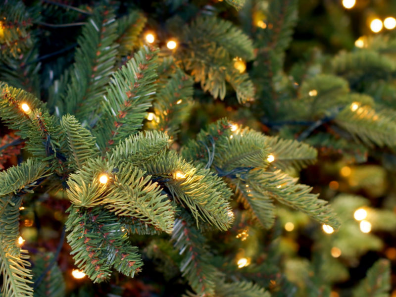 At the end of the holiday season there are plenty of ways to reuse your Christmas tree here in Walled Lake, MI.