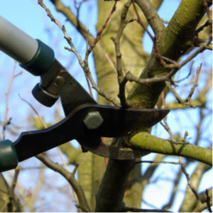 Tree maintenance in the winter, like winter pruning, is extremely beneficial for your Canton, MI trees.
