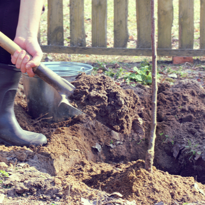 Make sure you don't dig your hole too deep or too shallow when tree planting in the spring here in Novi, MI.