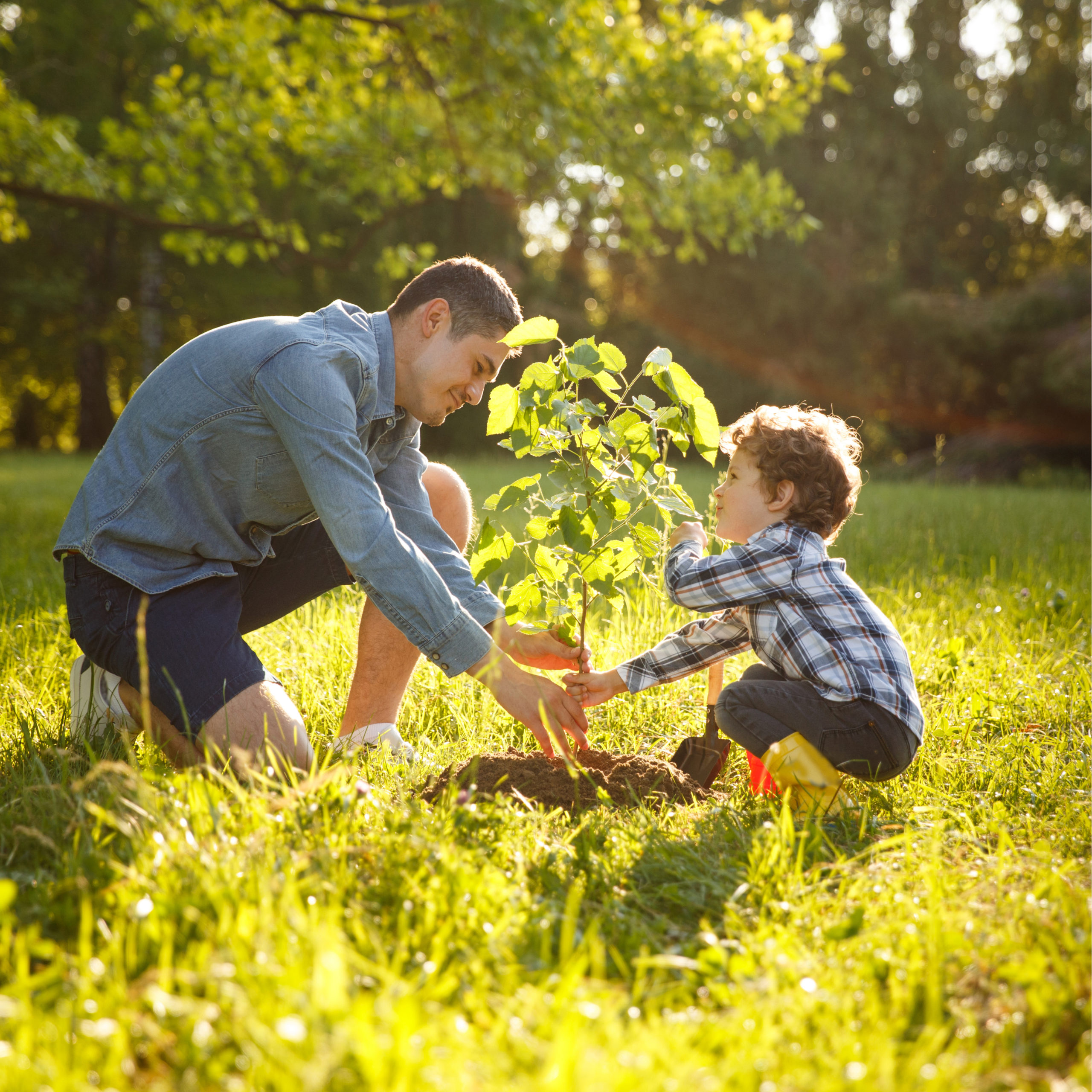 Tree planting in the spring is a great way to add a sturdy and long-lasting feature to your property.
