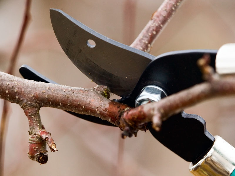 Get to know the difference between tree timming and tree pruning before deciding on the best service for your Michigan tree.