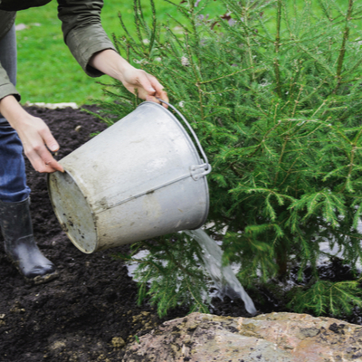Remember, when tree planting in the spring, it's important to give your new tree plenty of water to help it grow throughout our Michigan spring and summer.