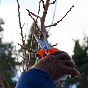Tree pruning is a precise tree service done to boost the health and growth of your beautiful Michigan tree.