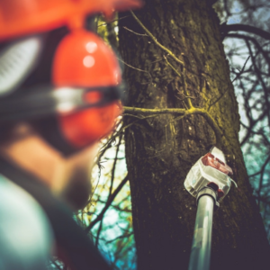 Knowing the difference between tree trimming and tree pruning helps you choose the right service, tree trimming for this smart homeowner.