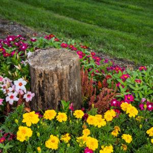 tree stump in flowers