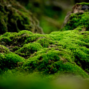 moss growing on the ground