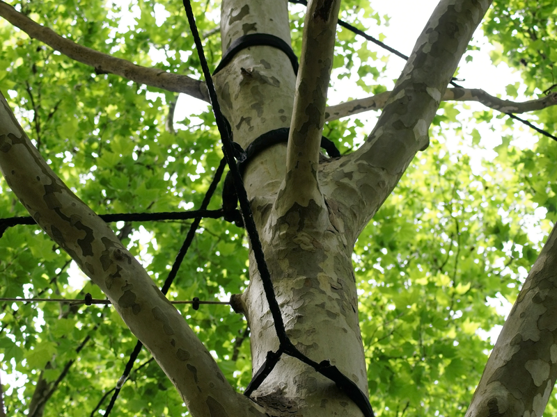 tree-cabling