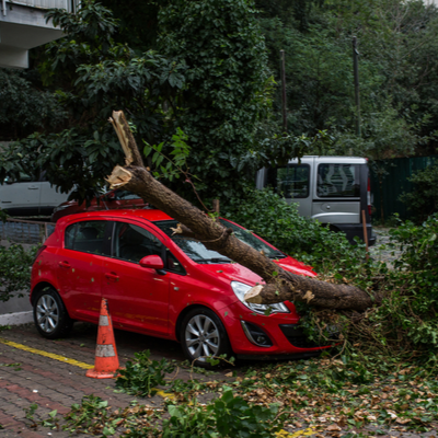tree fallen on vehicle